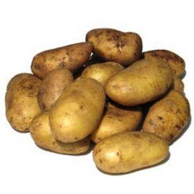 Картофель (голландка)