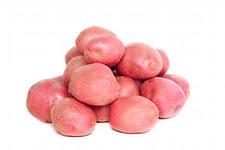 Картофель (розовый)